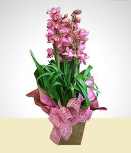 orquidea romantica e sempre